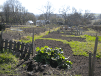 allotments2